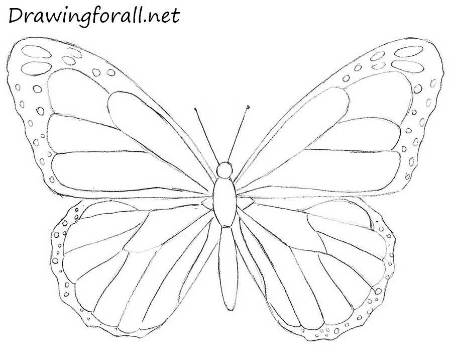 Draw A Butterfly  Teaching Ideas